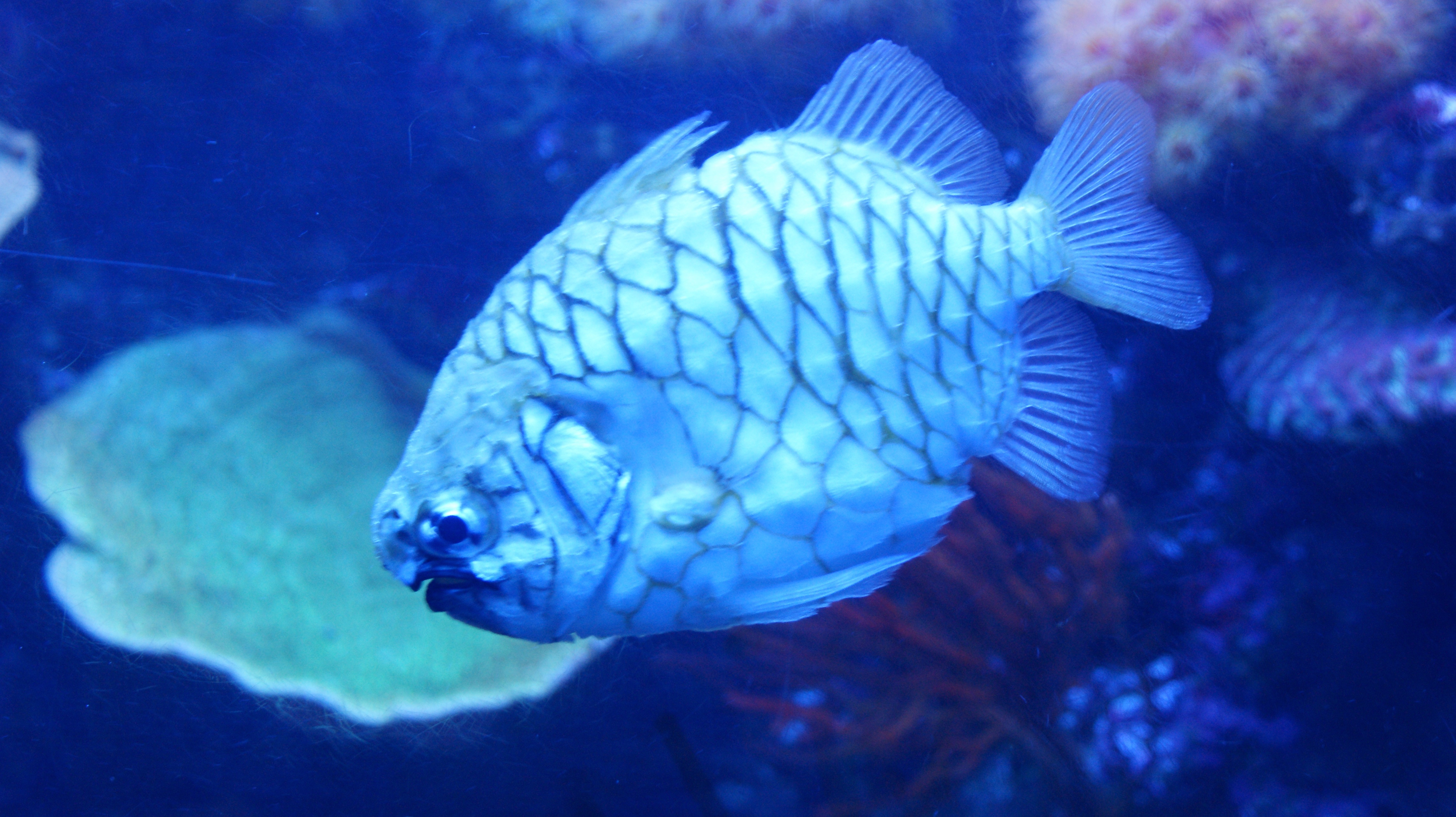 Friday morning photograph open thread fish and for Urine smells like fish after eating fish